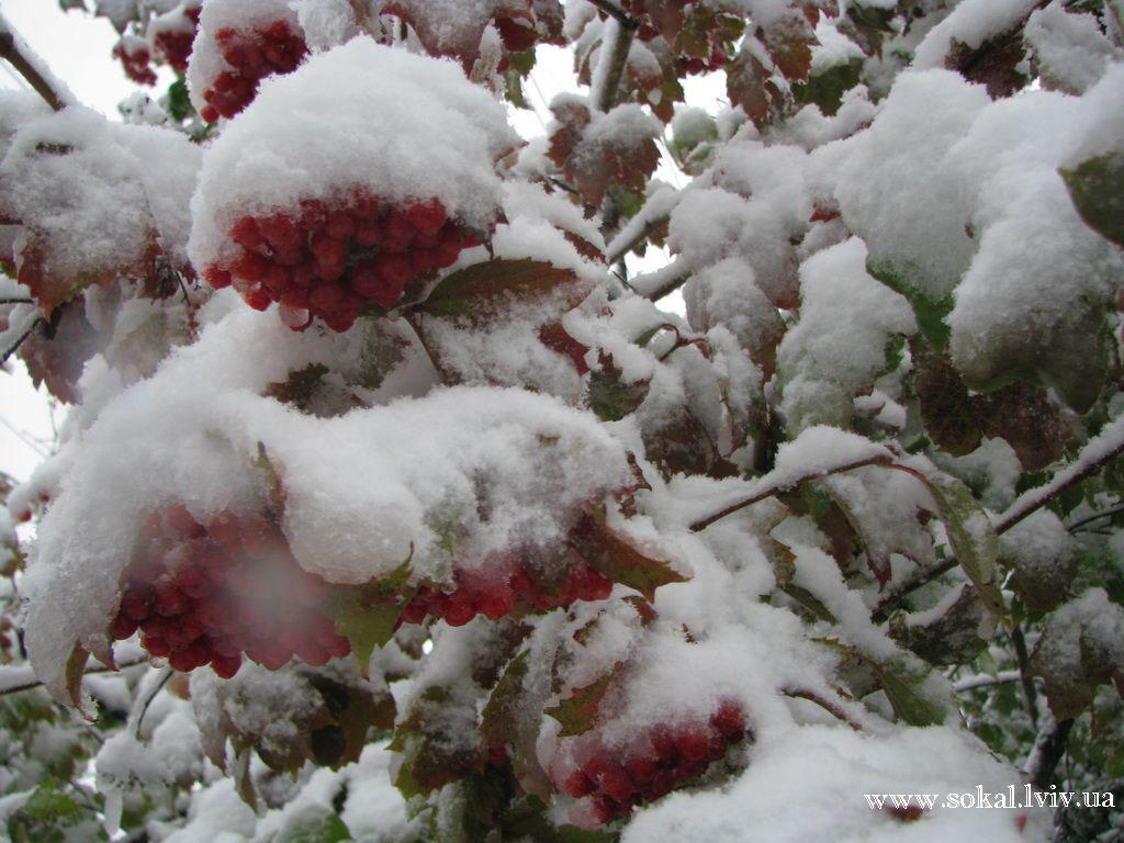 м.Сокаль, Перший сніг