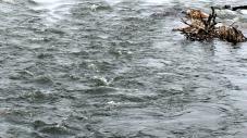 На Сокальщині запобігають ймовірним паводкам